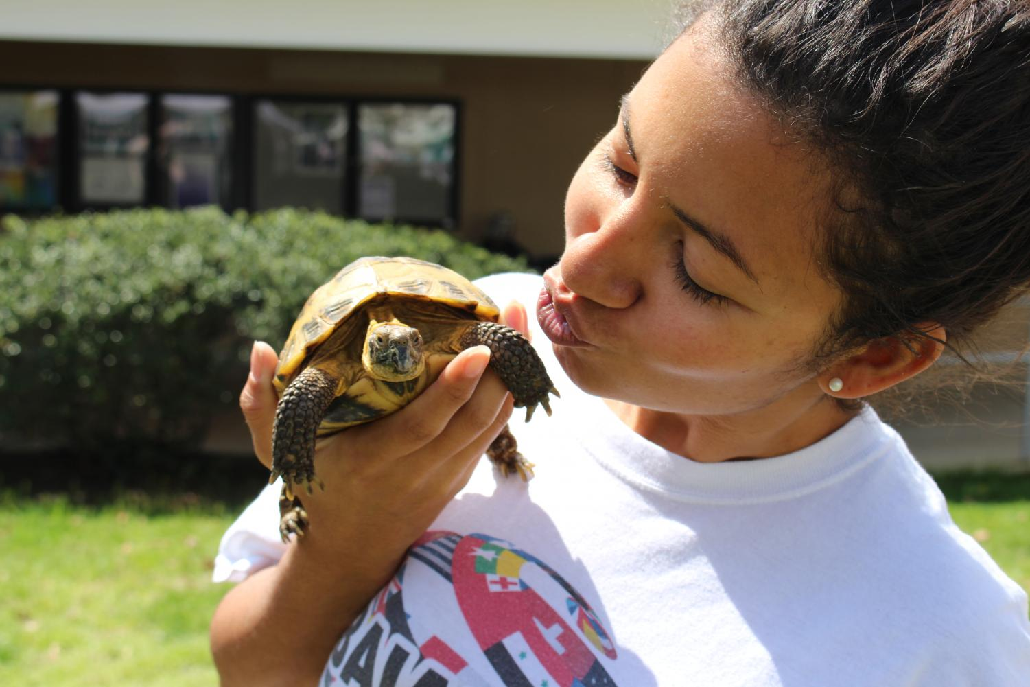 With+all+those+big+snakes+and+horned+lizards%2C+the+less+scary+types+of+reptiles+were+tossed+aside.+The+turtles%2C+cute+and+peaceful%2C+did+not+get+the+attention+they+deserved%21%21